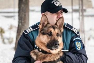 Baia Mare: Substante interzise depistate de echipajul canin