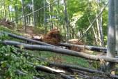 APIA anunta perioada de depunere a cererilor pentru impadurire si servicii de silvomediu si conservare a padurilor