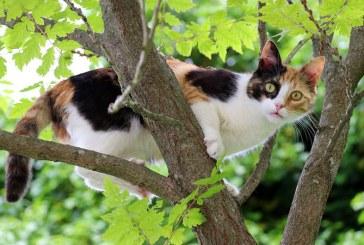 Alerta ISU Maramures: Misiune de salvare a unei pisici ajunsa in copac