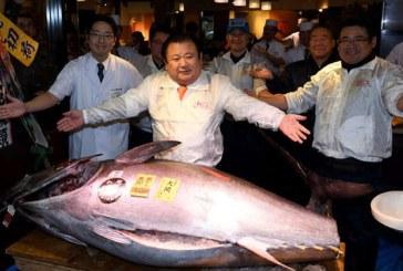 Japonia: Un ton urias, vandut la licitatie pentru 36 milioane de yeni