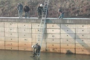 Caine salvat de pompieri din apele raului Sasar (FOTO)