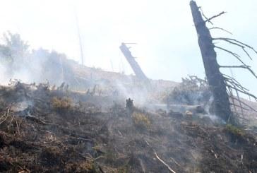 Incendiul de la Borsa a fost stins. Zeci de hectare de vegetatie alpina afectate