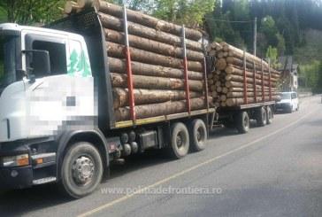49 dosare penale intocmite de politistii maramureseni in domeniul forestier