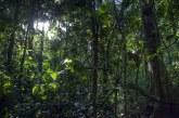 Brazilia – Defrişările din pădurea amazoniană, la cel mai înalt nivel după 2008