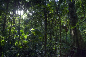 World Ressources Institute: 12 milioane de hectare de paduri tropicale, distruse in 2018