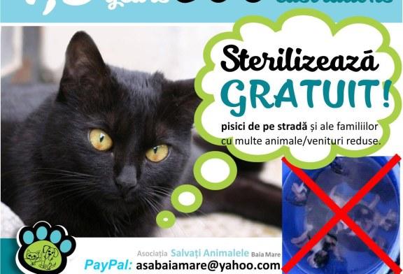 Baia Mare: Campanie de sterilizare gratuita a pisicilor