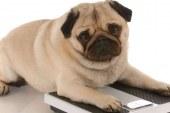 Cainii supraponderali au un comportament similar oamenilor care sufera de obezitate