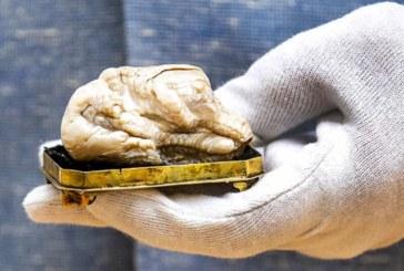 Cea mai mare perla naturala de apa dulce din lume, vanduta la licitatie cu 320.000 de euro