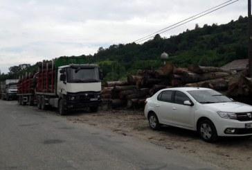 Actiune: Lemn confiscat de politistii maramureseni