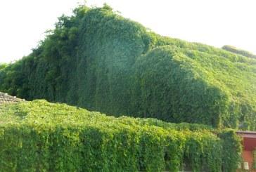 Imaginea zilei: Acoperis verde, in Baia Mare