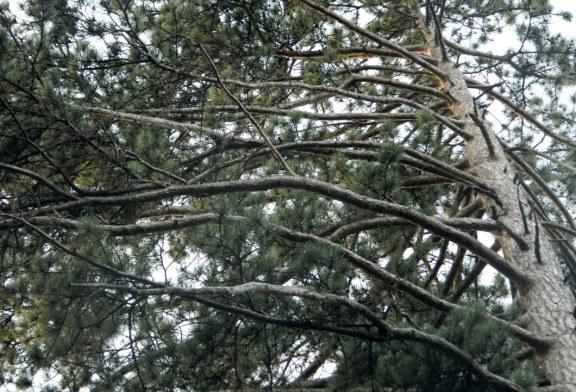 Imaginea zilei: Din natura