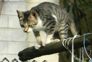 O noua meserie in China: detectiv high-tech pentru pisicile ratacite