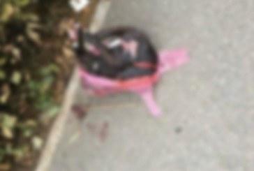 Baia Mare: Cadavrul unui caine mort lasat pe strada Granicerilor a facut furori pe Facebook