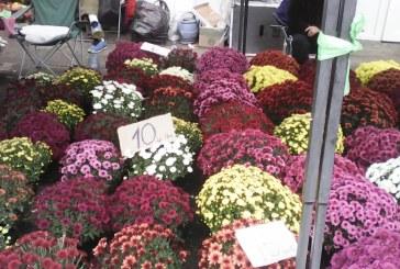 MAI RAR: Tineri prinsi cu ghivece cu flori furate. Voiau sa le vanda in piata