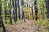 Europa a pierdut în ultimii ani vaste arii de pădure ca urmare a intensificării exploatărilor forestiere