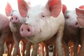 """Fermierii pot depune până la data de 31 iulie deconturile sau documentele justificative pentru """"Bunăstarea animalelor"""""""