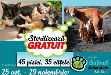 Asociatia Salvati Animalele Baia Mare: O noua campanie de sterilizare gratuita a cainilor si pisicilor