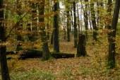 Romsilva demareaza procesul de inscriere a dreptului de proprietate a statului roman asupra padurilor administrate