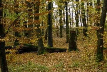 Denes: Romania are, dupa Ucraina, cea mai mare suprafata de paduri inscrisa in Patrimoniul Mondial UNESCO