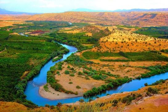 Irak – Concentratiile ridicate de metale grele si amoniac au provocat moartea a mii de tone de crap din Eufrat