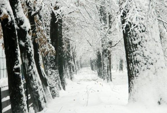 Meteo: Temperaturile maxime vor fi, astazi, cuprinse intre -6 si -3 grade C. La Targu Lapus, Cavnic, Borsa, Viseu de Sus, Petrova si Ocna Sugatag -7 grade C