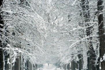 Peisaj de basm: Parcul Municipal Baia Mare cum rar l-ai mai vazut (FOTO)
