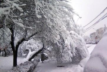 UPDATE – Iarna in Baia Mare: Trotuare blocate de copaci doborati de zapada (FOTO)