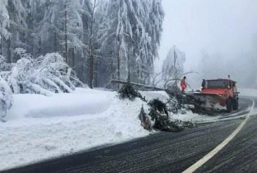 Copac prabusit sub greutatea zapezii in Pasul Gutai. Vizibilitatea este redusa in Pasul Prislop