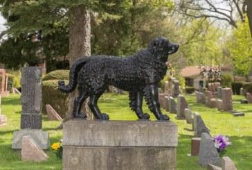 Baia Mare: Cimitirul pentru animale a ramas doar pe hartie… Detinatorii de animale cred ca executivul Primariei tergiverseaza initierea lucrarilor