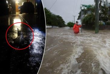 Australia: Pe strazile unui oras afectat de inundatii au fost zariti crocodili