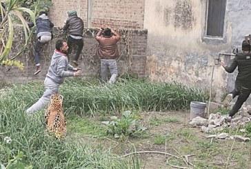 India – Un leopard ratacit a provocat panica in randul locuitorilor unui oras nordul tarii