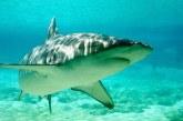 IUCN-17 specii de rechini sunt in pericol de disparitie