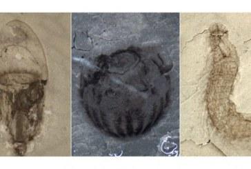 Un tezaur de fosile datand din urma cu peste 500 de milioane de ani, descoperit in China