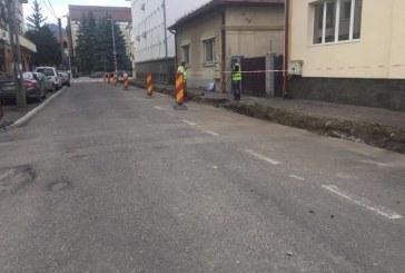 Baia Mare: 30 de copaci vor fi plantati pe strada Nicolae Titulescu, strada de pe care a fost defrisata vegetatia in urma cu cateva zile