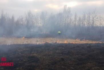 In Baia Mare, Ieud, Ocna Sugatag, Sighetu Marmatiei si Hovrila incendiile au mistuit peste 20 ha de vegetatie uscata