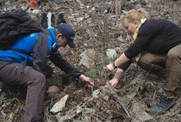 Solidari cu natura. Jandarmii montani din Borsa au plantat peste 500 de puieti in zona Colbu