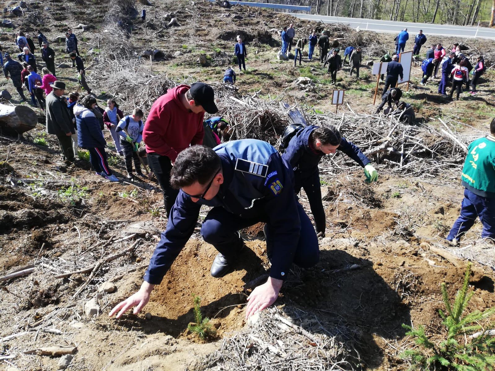 Politistii si elevii au plantat puieti in Baia Sprie (FOTO)