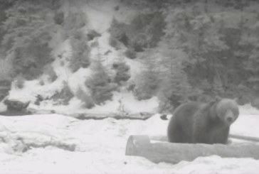 Imagini UNICE: Urs surprins intr-o padure din Maramures (VIDEO)