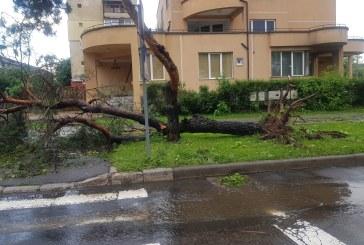 Efectele furtunii: Peste 100 de copaci doborati in Baia Mare. Ce alte pagube s-au mai inregistrat