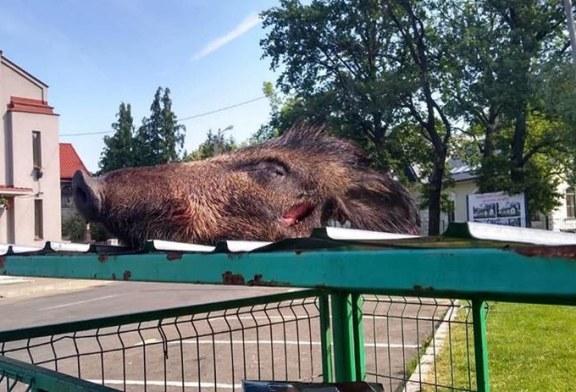 UPDATE – Descoperire MACABRA in Baia Mare: Un cap de mistret aruncat la tomberon (FOTO)