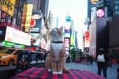 New York a devenit primul stat american care a interzis practica extirparii ghearelor pisicilor