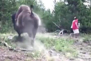 SOCANT: Momentul in care o fetita este aruncata in aer de un bizon (VIDEO)