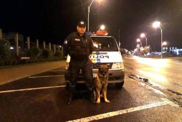 Caz rezolvat: Vis, cainele politist al zilei