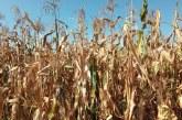 Bulgaria, Grecia, Polonia si Romania au cea mai ridicata pondere a populatiei ocupate in agricultura
