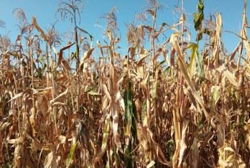 Romania a importat produse agroalimentare de peste 5,43 miliarde de euro, la 8 luni