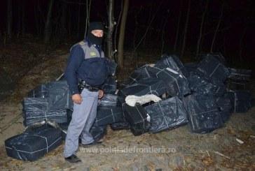 Tigari de contrabanda descoperite intr-o padure din Sarasau