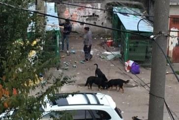 Baimarenii trag semnale de alarma. Romii nu pot fi opriti. Autoritatea locala doarme. Cartierele sunt invadate de mizerii! (FOTO)