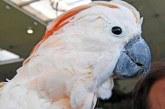 36 de papagali confiscati, cu o valoare totala de circa 100.000 de euro, vor fi scosi la licitatie in Germania