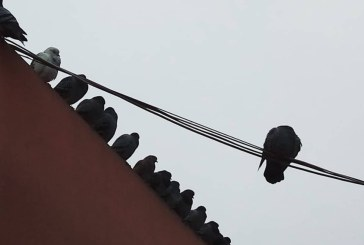 Imaginea zilei: Porumbei la relaxare