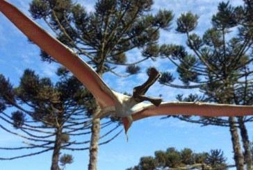 O noua specie de pterozaur, o reptila zburatoare preistorica, descoperita in Australia